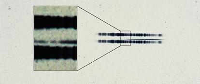 chapa fotográfica mostra o espectro da estrela van Maanen