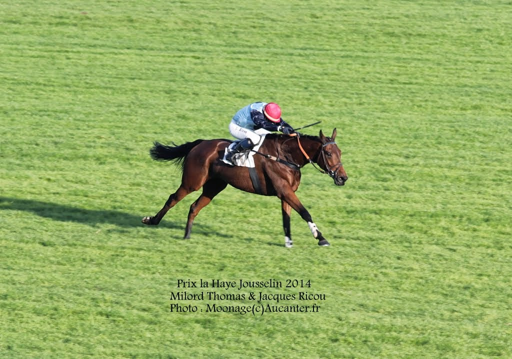 Photos Auteuil 2-11-2014 (48h de l'obstacle) IMG_5652