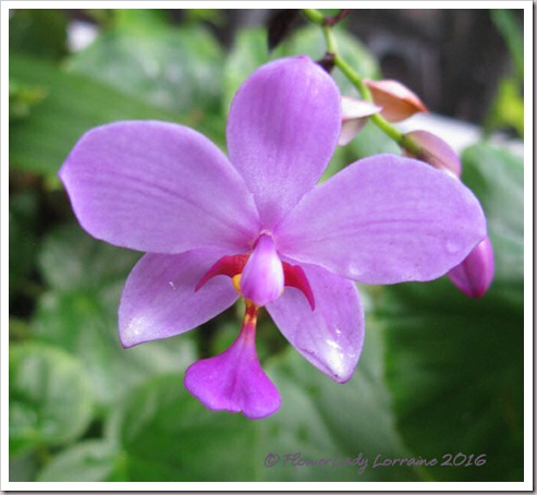 10-01-grnd-orchid