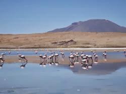 Laguna Colorada y sus flamencos rosados, para disfrutar cerca del salar de Uyuni