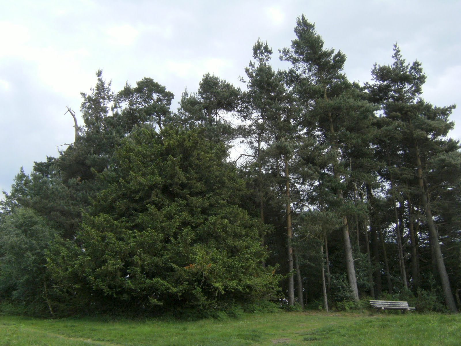 1006120050 The Enchanted Place, Ashdown Forest
