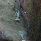 Langostas del Acuario
