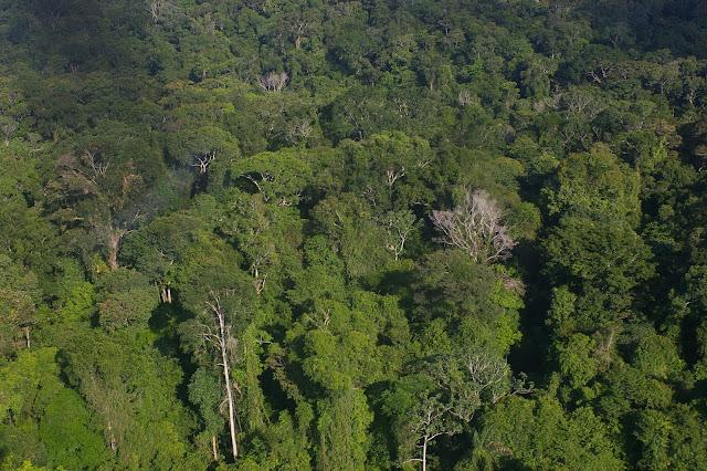 La forêt guyanaise près de Saül (Guyane). 29 novembre 2011. Photo : J.-M. Gayman