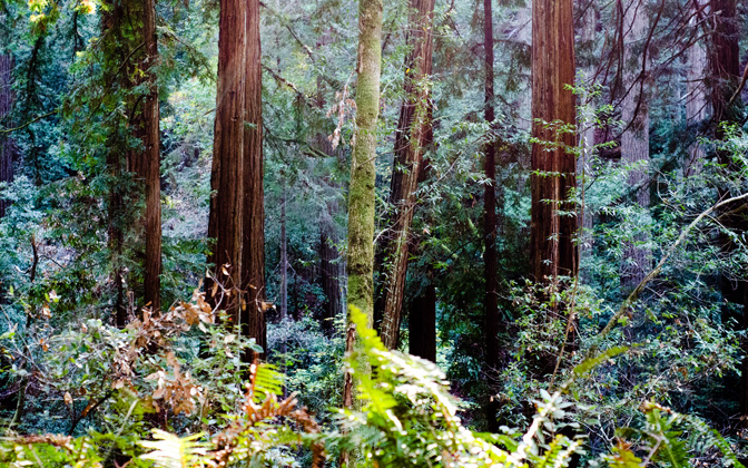 Forests of Endor by caseynoble1