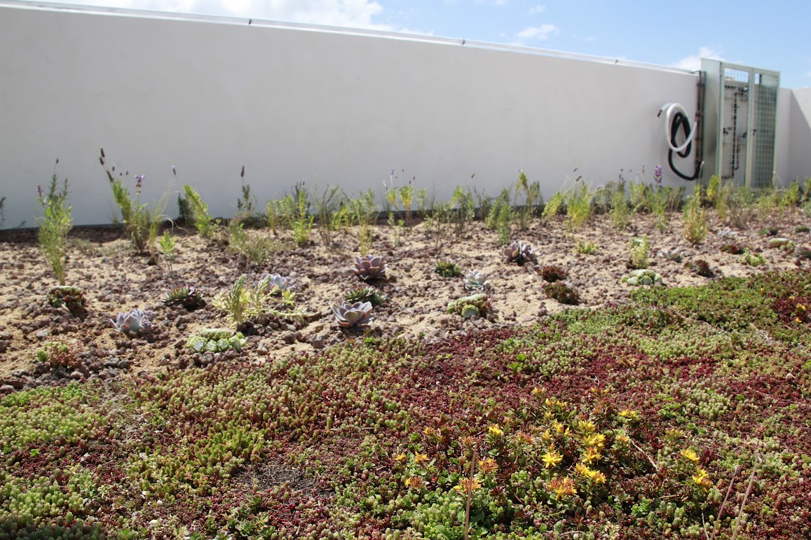 cubierta vegetal villena sedum tepe césped cántir crasas aromáticas