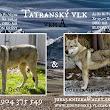 A Tatranský vlk vrh (1).jpg