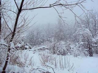 DSC01433 - Nevando el sábado, paraiso el domingo.