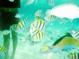 ngebolang-pulau-harapan-singletrip-nov-2013-wa-06 ngebolang-trip