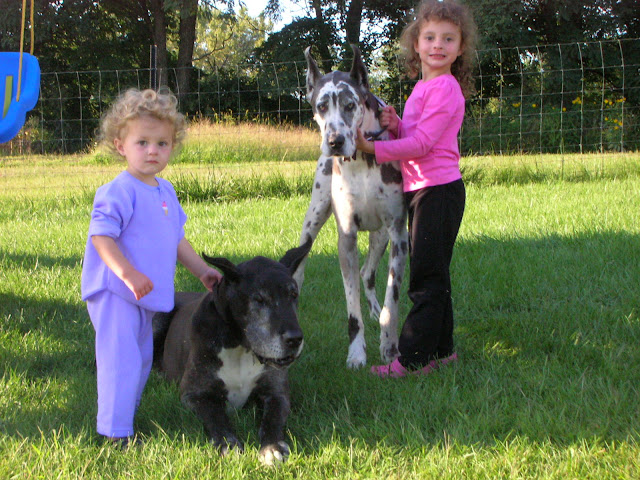 The Dynamite Danes Family! - Gentle%2BGiants%2B012.jpg