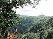 Rumah Pohon Desa Tombo Bandar