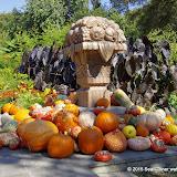 10-26-14 Dallas Arboretum - _IGP4337.JPG