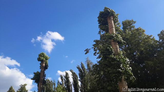 Волгоград: обрезка деревьев