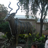 Our host mother recently commissioned this Kudu statue for the front of her house