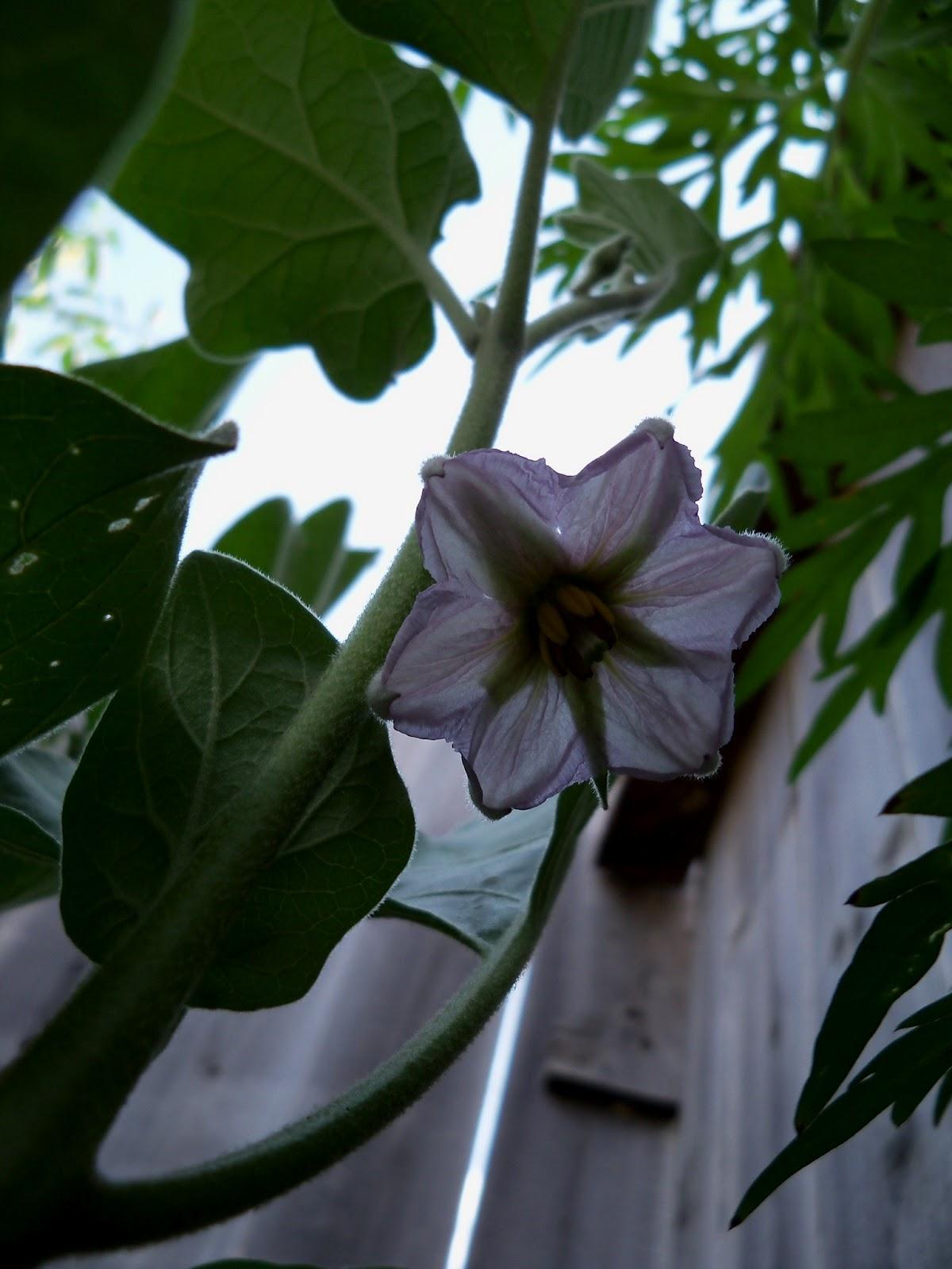 Gardening 2011 - 100_0058.JPG
