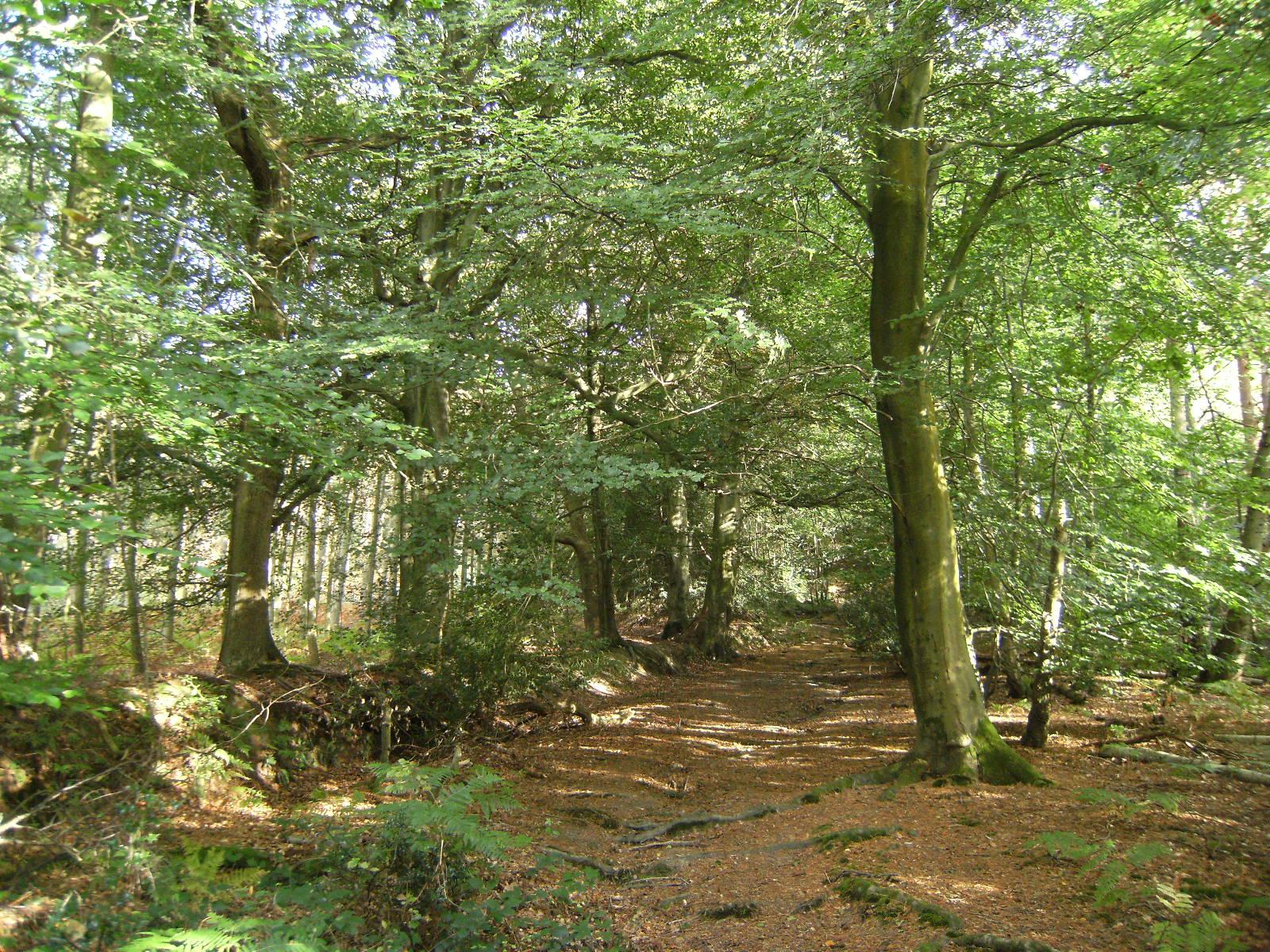 DSCF9702 Through Stumblewood Common