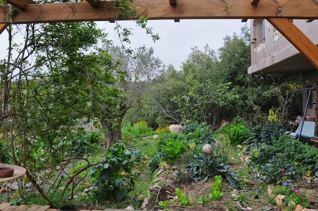 Erez Komarovsky 's garden