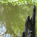 Arboretum de la Vallée-aux-Loups : cyprès des étangs