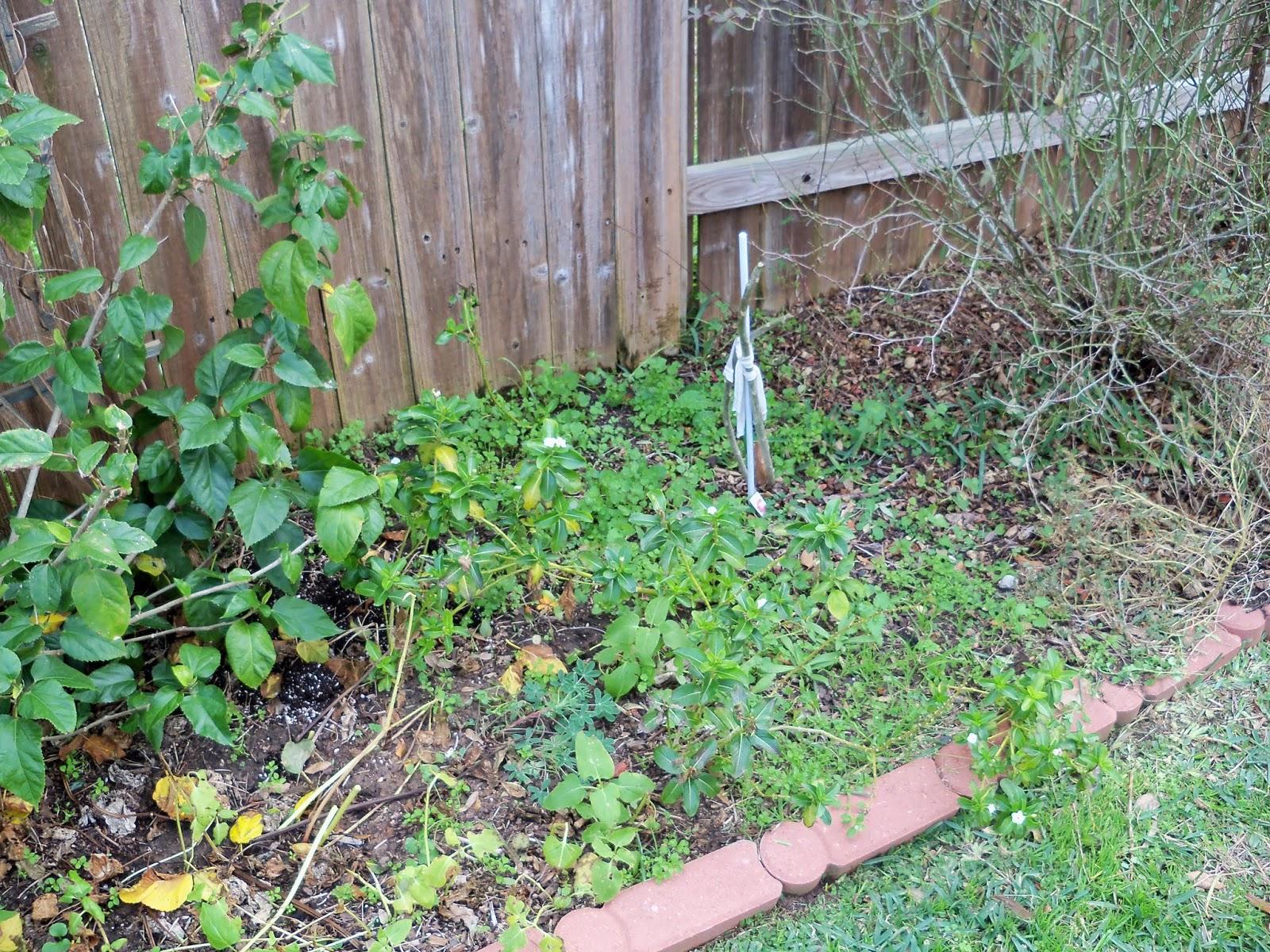 Gardening 2013 - 115_5124.JPG