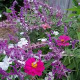 Gardening 2012 - 115_1672.JPG