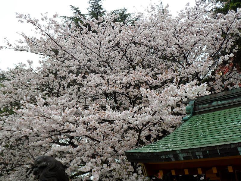 2014 Japan - Dag 5 - tom-SAM_0411-0016.JPG