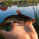 20140715_Fishing_Shpaniv_007.jpg