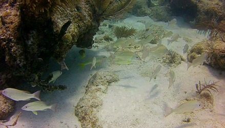Diving at Looe Key Reef