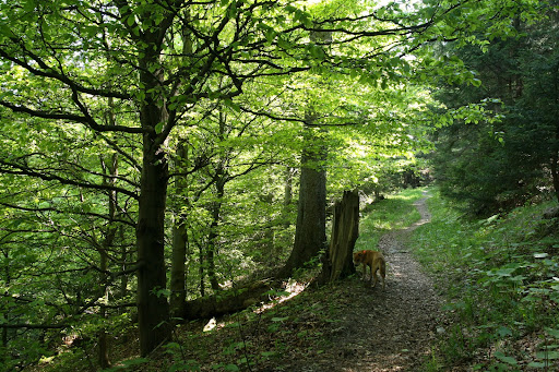 V lese pod Drapáčom