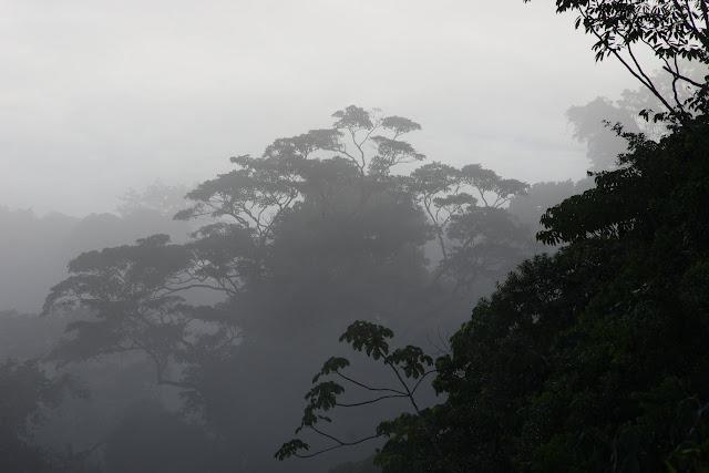 Brume matinale près de l'Auberge des Orpailleurs (RN2, PK 63), 28 octobre 2012. Photo : J.-M. Gayman