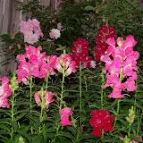 Gardening 2012 - 115_1261.JPG
