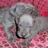 Sofia's babies @ 3 weeks