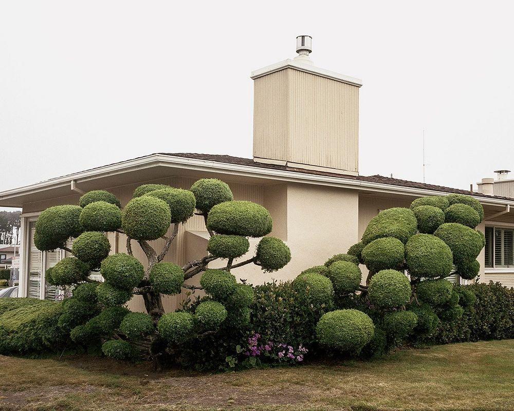 marc-alcock-topiary-6