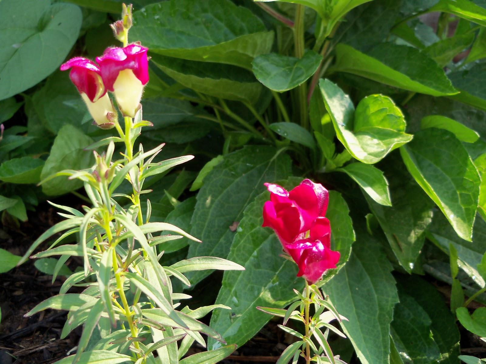 Gardening 2010, Part Two - 101_3334.JPG