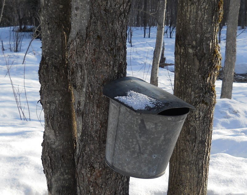 Natural Earth Farm Maple Sugaring Frugally