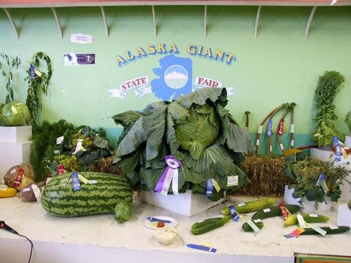 alaska-gigante-verdure-4