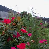 Gardening 2010, Part Three - 101_5220.JPG