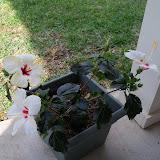 Gardening 2010 - 101_0970.JPG