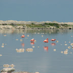 Flamingo's at the salt lakes