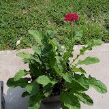 Gardening 2010, Part Two - 101_3138.JPG