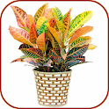 House Indoor Plants icon