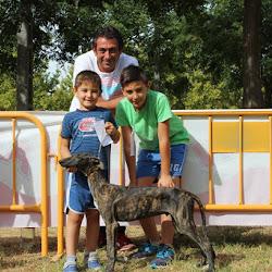 Concurso Morfológico del Galgo Español Ciudad de Montijo