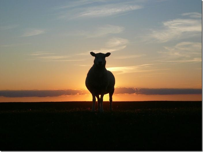 L'interprétation des rêves en Islam sur le mouton.