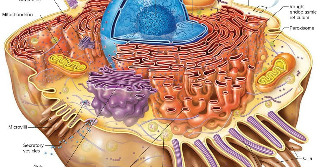 Cell Biology, Cell Structure
