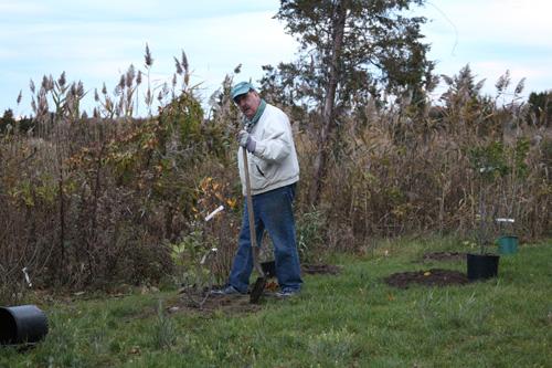 Hammo Fall Planting - Jim Murtagh - BC3G2509.jpg