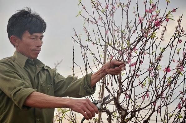 Đào Nhật Tân ùn ùn trở lại vườn sau Tết - 3