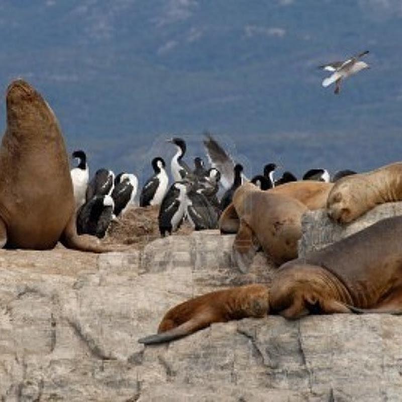 Patagonia e Terra del Fuoco, l'ultima frontiera. Immagini e fotografie.