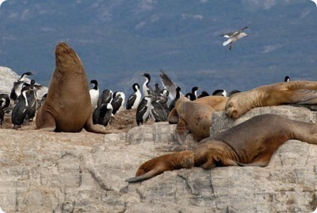 terradelfuoco isola-del-canale-di-beagle