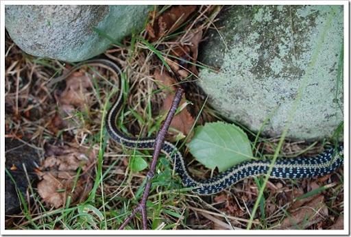snake (3)