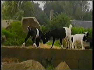 2001.08.26-001 chèvres
