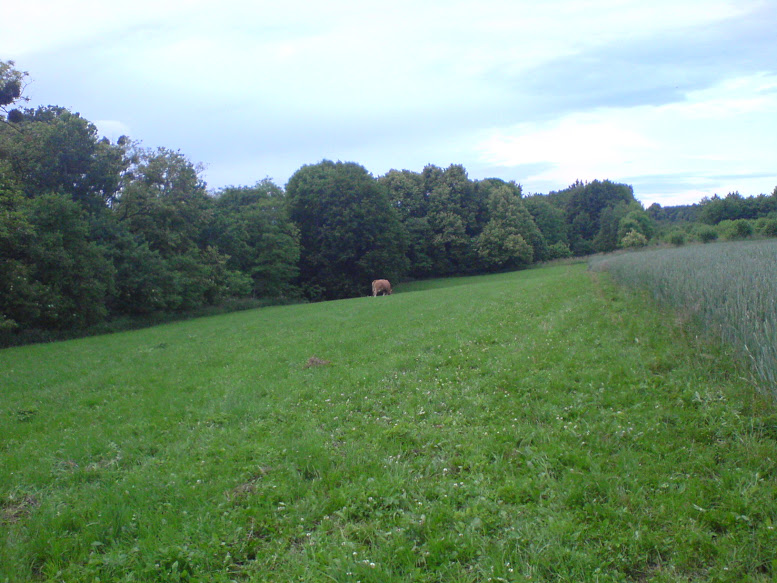 Leśnickie łąki