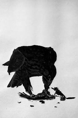 falcon-detail.jpg